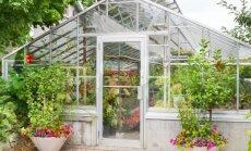Kaip apsaugoti augalus šiltnamiuose, kad neperkaistų