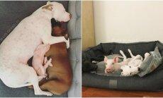 Gyvūnų draugystė prieglaudoje