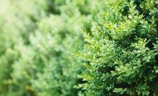 Kaip pasirinkti augalus gyvatvorei pagal aukštį