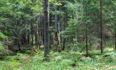 Norima sužinoti, kiek verti Lietuvos miškai