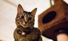 Kačių kavinė / PhoTones_TAKUMA nuotr.