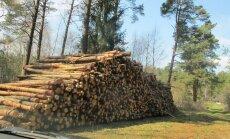 Miškų kirtimas