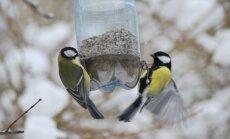 Gamtininkas sako, kad paukščiai kol kas lesalo randa ir natūralioje aplinkoje