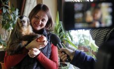 Beždžionė Kauno zoologijos sode