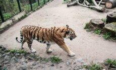 Lankytojai galės pamatyti naujų zoologijos sodo gyventojų