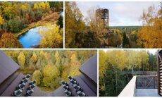 Medžių lajų takas rudenį