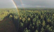 Miškas ir vaivorykštė