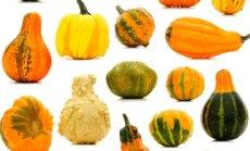 Kokias ir kaip agurkines daržoves auginti lysvėje ir šiltnamyje?