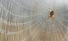 Patarimai, kaip išvengti vorų draugijos