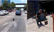 Dviratininkė išgelbėjo į kelią išbėgusį šunį
