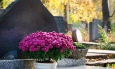 Kapų apsodinimas: kaip paruošti dirvą ir kokius augalus pasirinkti?