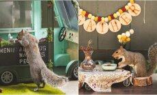Fotografė rengia vakarėlius voverėms