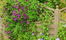 """<span style=""""color: #ff4040;"""">""""Garden Style"""":</span> kaip paslėpti sklypo trūkumus"""