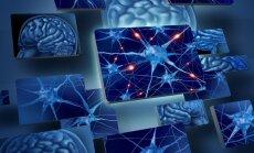 Smegenų aktyvumas