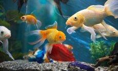 Namų puošmena – akvariumas