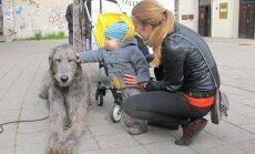 Vaikas glosto vilkogaudžių veislės šunį