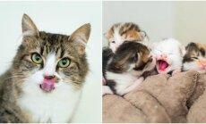 Moters priglausti kačiukai