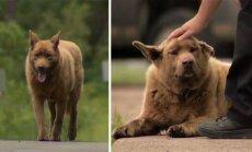 Keliaujantis šuo Bruno