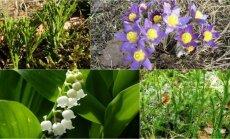 Augalai, prie kurių nagų geriau nekišti