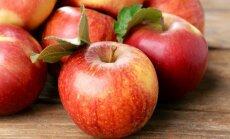 """<span style=""""color: #ff4040;"""">Ruošiamės derliui:</span> 12 būdų, kaip paruošti obuolius žiemai"""