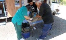 Mobili veterinarijos klinika