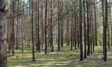 Šiuo metu miške bet kada gali kilti gaisras