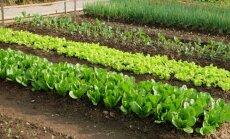 Svarbiausi darbai ruošiant daržą: 5 svarbiausi žingsniai