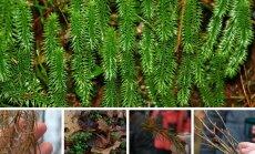 Pelkių ir miškų gėrybės