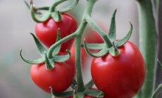 Gegužė – daržovių sodinimo mėnuo