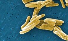 Tuberkuliozės sukėlėjas - Mycobacterium tuberculosis