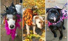 Šunų Helovinas