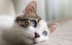 Gyvūnų ūsų paslaptis: ką turime apie tai žinoti?