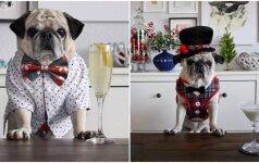 Stilingiausias pasaulio šuo: garderobą keičia lyg modelis