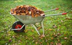 5 patarimai, kaip paruošti veją vėlyvam rudeniui ir žiemai
