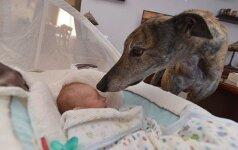 Labai jautri istorija: išgelbėtas šuniukas tapo geriausiu kūdikio draugu
