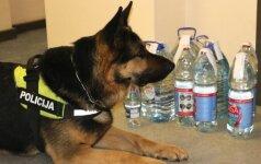 Unikali tarnybinio šuns Attilo uoslė atvedė į telšiškio garažą
