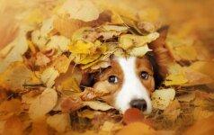 Ką būtina žinoti, kad šuo išvengtų traumų?