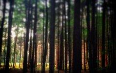 Visa tiesa apie medžių stebuklingą poveikį aplinkai