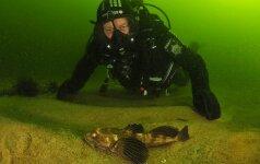 Vasara Baltijos pakrantėje: kokius gyvūnus galime pamatyti vandenyje