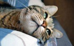 Kodėl katės taip įdėmiai spokso į akis