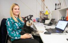 Biuro darbuotojai dalinasi visais rūpesčiais: vedžioja, šeria ir prižiūri kolegų šunis