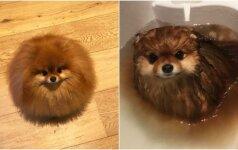 Šuns maudynės linksmina internautus: atrodo, kad jis tirpsta vandenyje