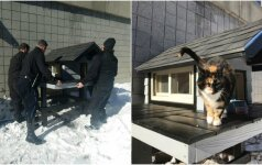 Policijos departamento talismanas: atklydusiam katinui pareigūnai pastatė namus