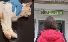 Iš balkono katę išmetęs vyras prieglaudoje sukėlė skandalą: grasino išdaužyti langus ir išžudyti darbuotojus