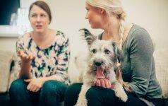 Šunų elgsenos ekspertė pataria: ką daryti, jei šuo graužia daiktus ir šlapinasi ant sofos