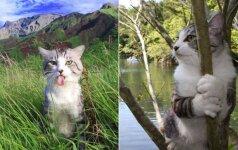 Žvaigžde tapęs katinas: tik pažvelkite, kaip jis meistriškai pozuoja prieš kameras