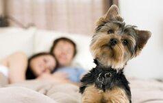 """""""Šuo lovoje netrukdo seksui"""". Ar tikrai? (gamtininko komentaras)"""