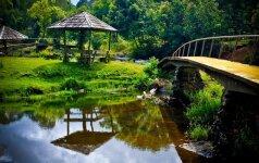Specialistės patarimai: kaip projektuoti sodybos aplinką