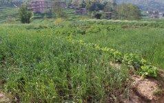Nepalas lietuvės akimis: vaikų namuose auklėtiniai patys auginasi daržoves ir gyvulius