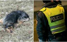 Internautai žavisi kilniu poelgiu: pareigūnai išgelbėjo ant kelio merdėjantį šunį